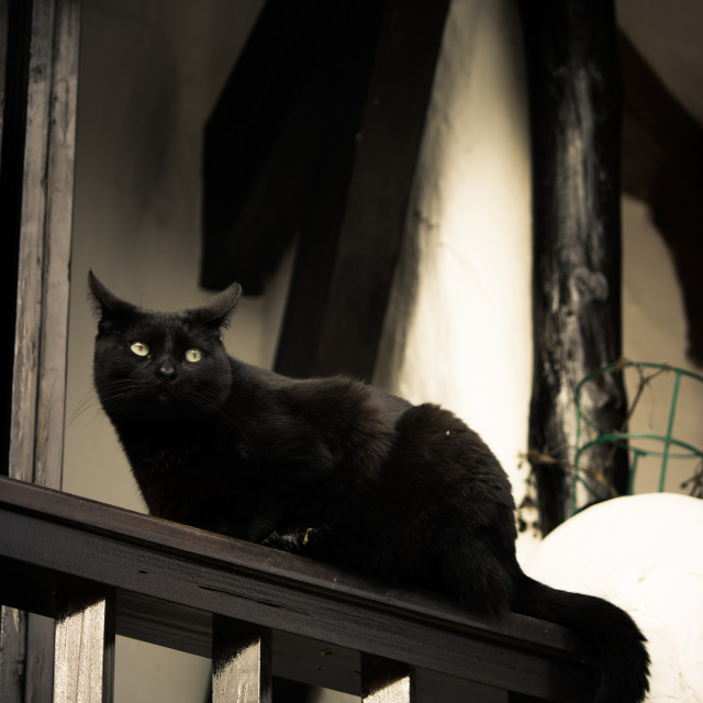 """A Witch's Familiar (Black Cat)"" stock image"