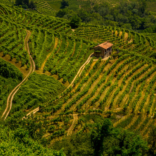 """Green hills and valleys with vineyards of Prosecco wine region"" stock image"