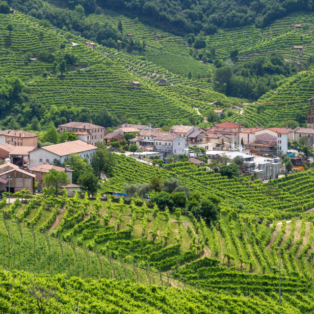 """Panorama of village of Santo Stefano surrounded by hills and vin"" stock image"
