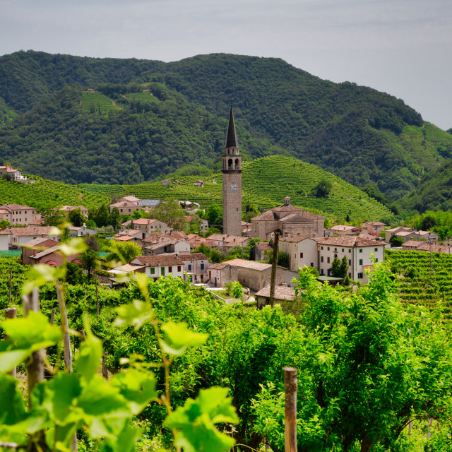 """Santo Stefano village surrounded by vineyards"" stock image"