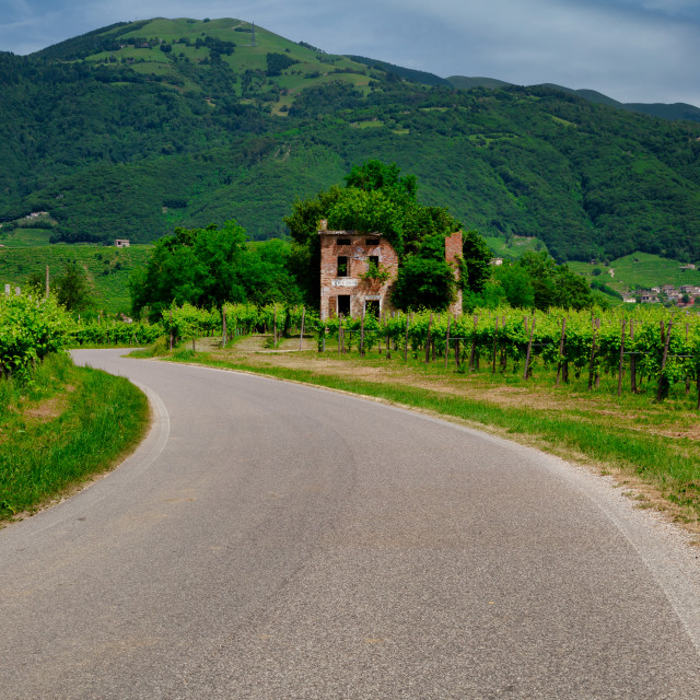 """Road between vineyards in Valdobbiadene."" stock image"