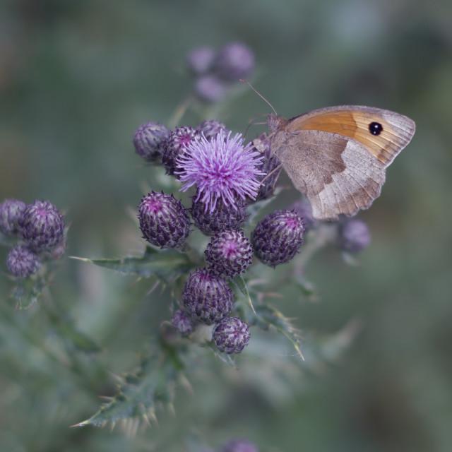 """Butterflies of Summer"" stock image"