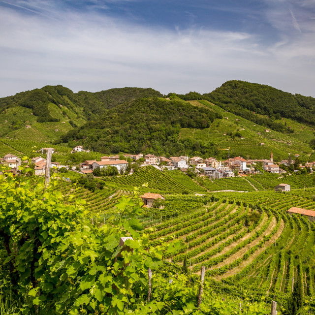 """Panorama of vineyard county around Valdobbiadene"" stock image"