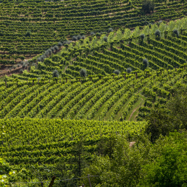 """A county of vineyards around Valdobbiadene"" stock image"
