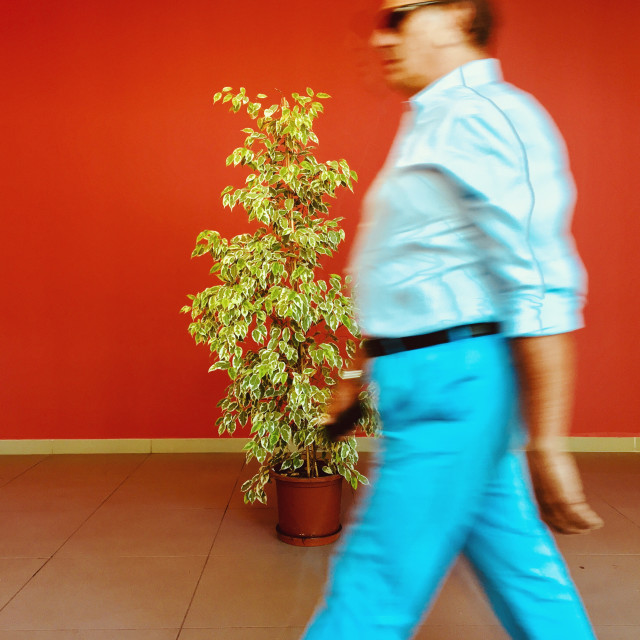 """""""Background and a plant"""" stock image"""