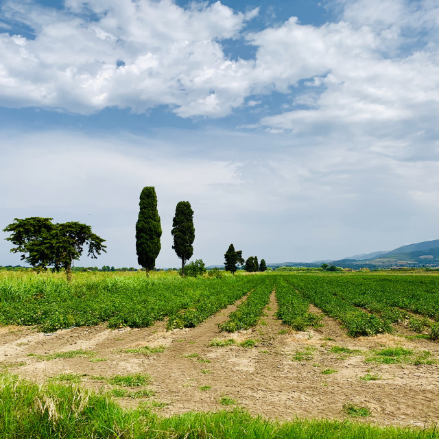 """Tuscany in the countryside"" stock image"