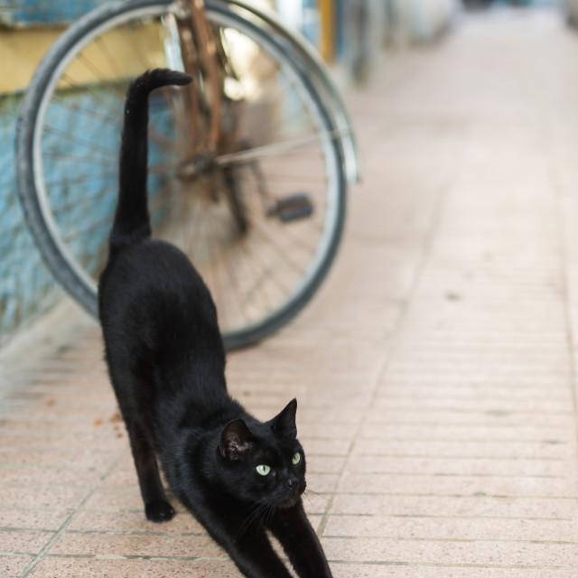 """""""Stray cat"""" stock image"""