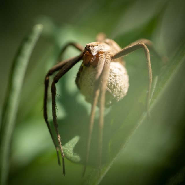 """""""Spider and cocoon"""" stock image"""