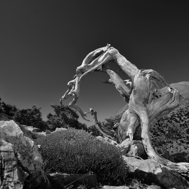 """""""sculpture in the mountain"""" stock image"""