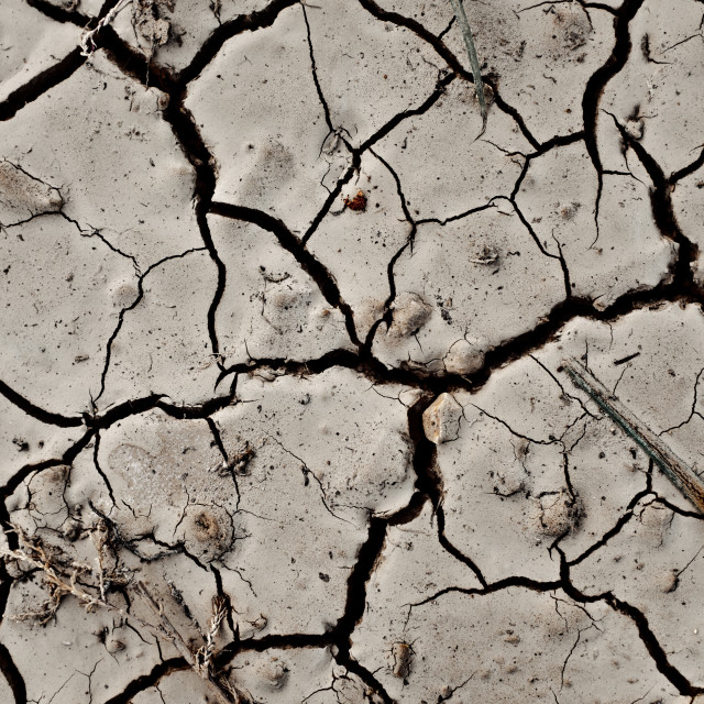 """Cracked Dry Land Texture"" stock image"