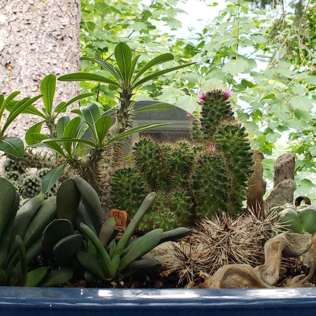 """""""Zen cactus and succulent garden"""" stock image"""