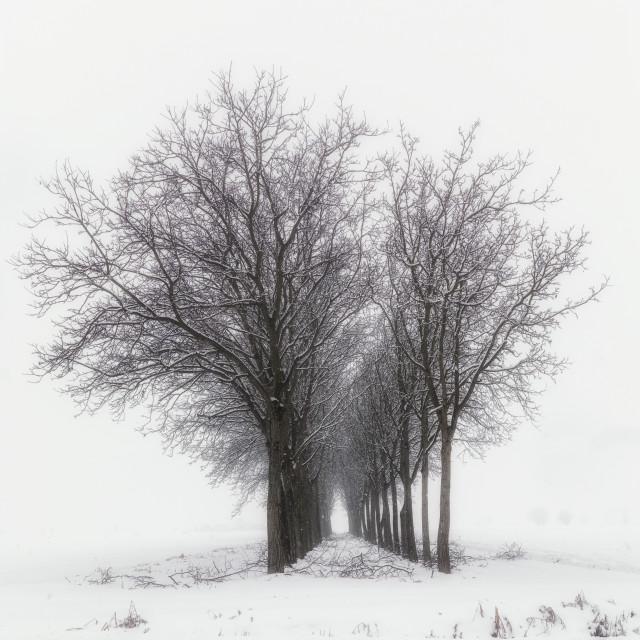 """""""Trees queue"""" stock image"""