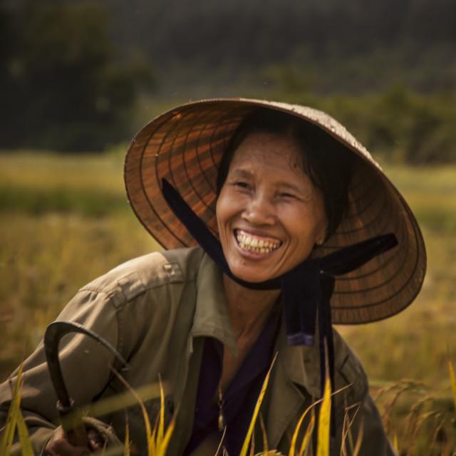 """Happy Vietnamese Rice Harvester"" stock image"