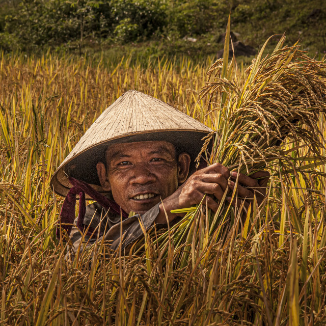 """We Grow Rice"" stock image"