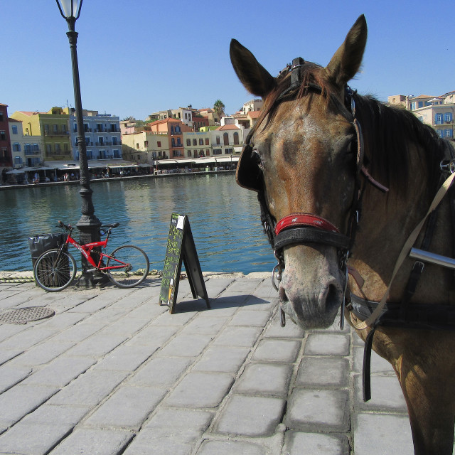 """""""A Horse waiting for a customer"""" stock image"""