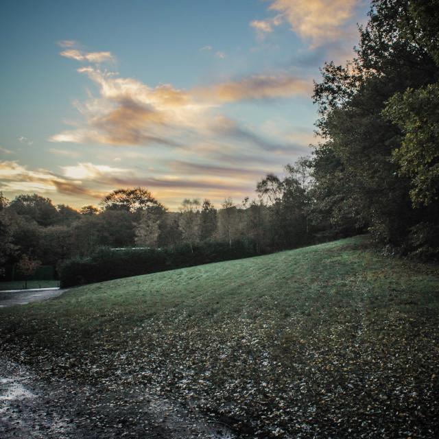 """Marple Woods, UK"" stock image"