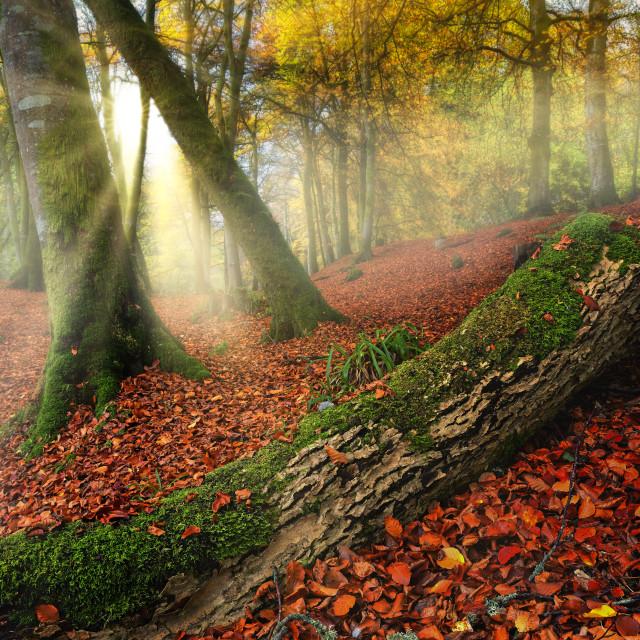 """""""Autumn Magic"""" stock image"""