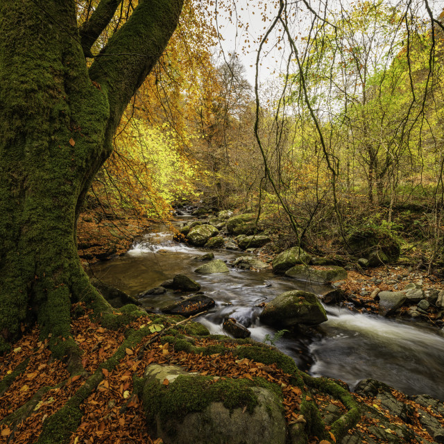 """The Autumn river"" stock image"