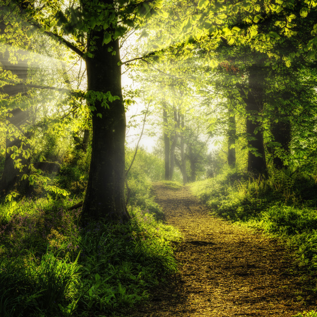 """The Sunlit Path"" stock image"