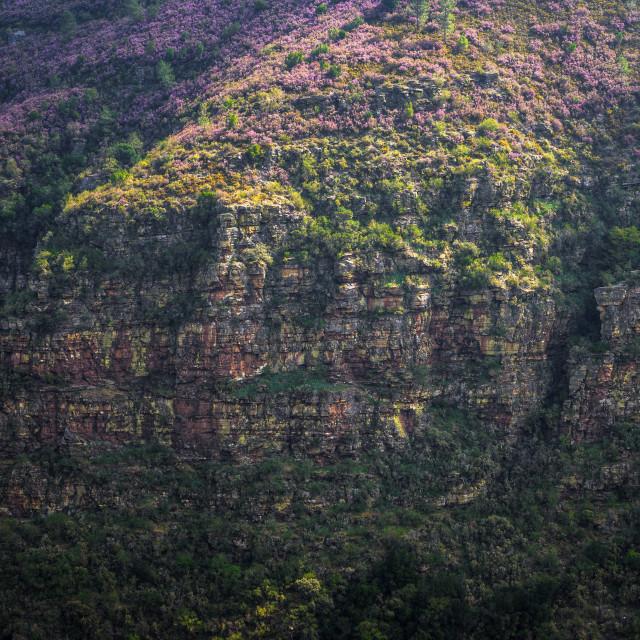 """Horizontal strata of quartzite rock on Devonian foldings"" stock image"