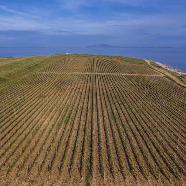 """Aerial view of vineyard"" stock image"