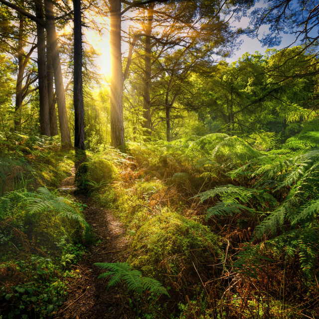 """Woodland light show"" stock image"