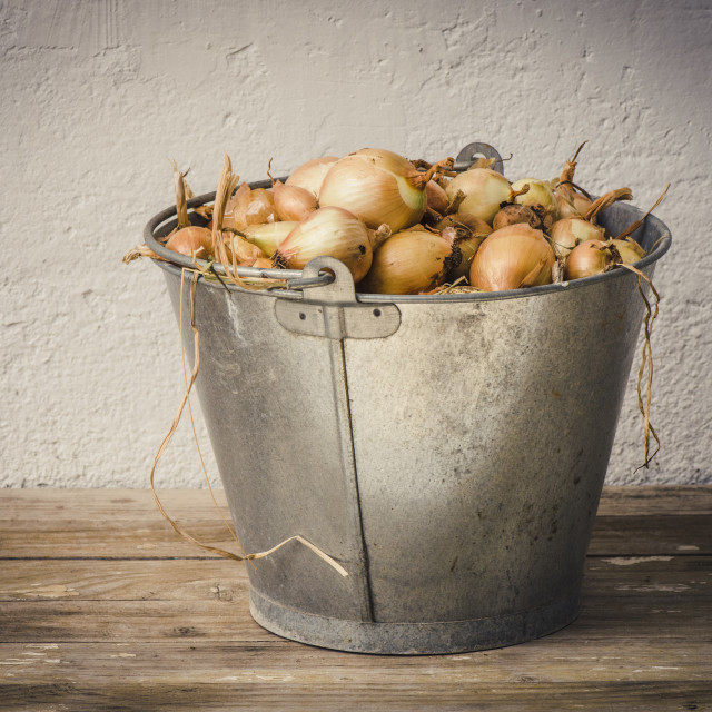 """Metal bucket filled with onions"" stock image"