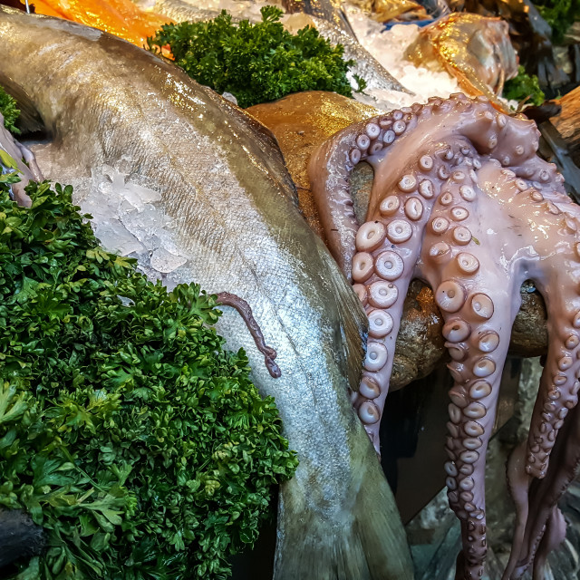 """""""A fish monger selling octopus and cod"""" stock image"""