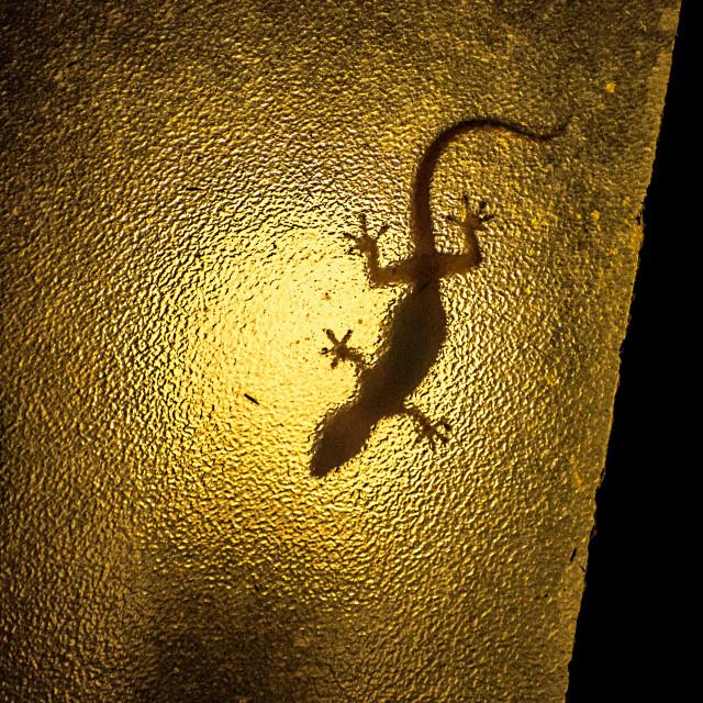 """Lizard on the Lamp"" stock image"