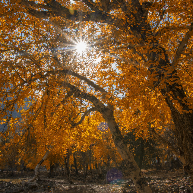 """Autumn in forest"" stock image"