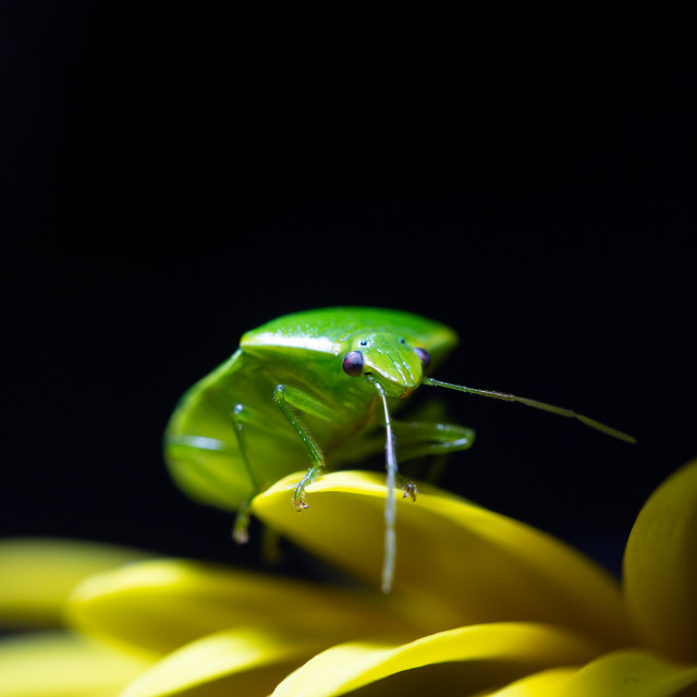 """Green Bug"" stock image"