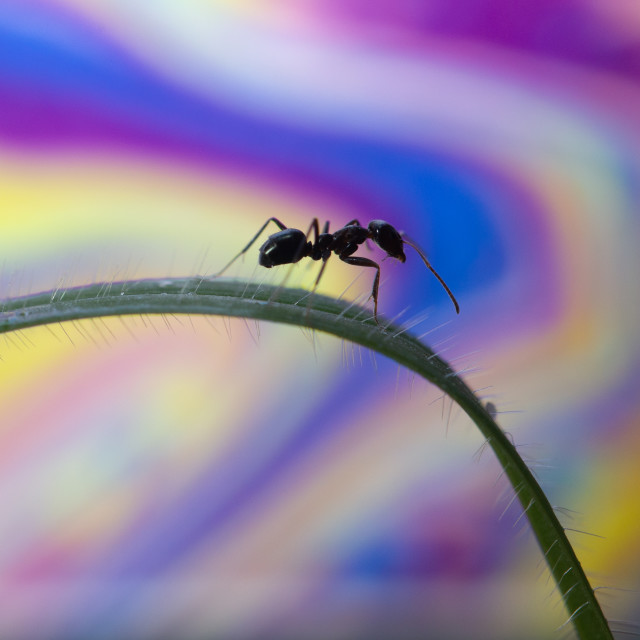 """Ant with psychedelic background"" stock image"