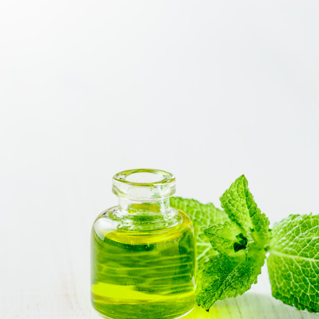 """""""Melissa or mint oil with green leaves, copyspace"""" stock image"""