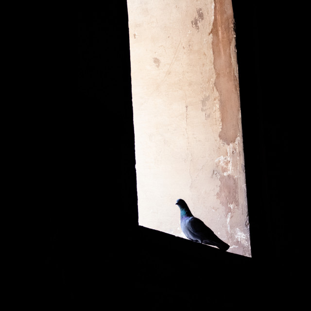 """""""Abstract window with pigeon"""" stock image"""