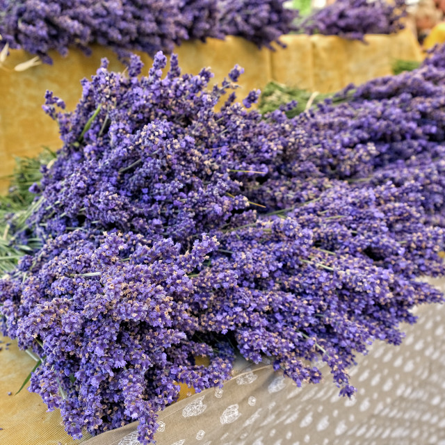 """Lavender on sale in Sault village market"" stock image"