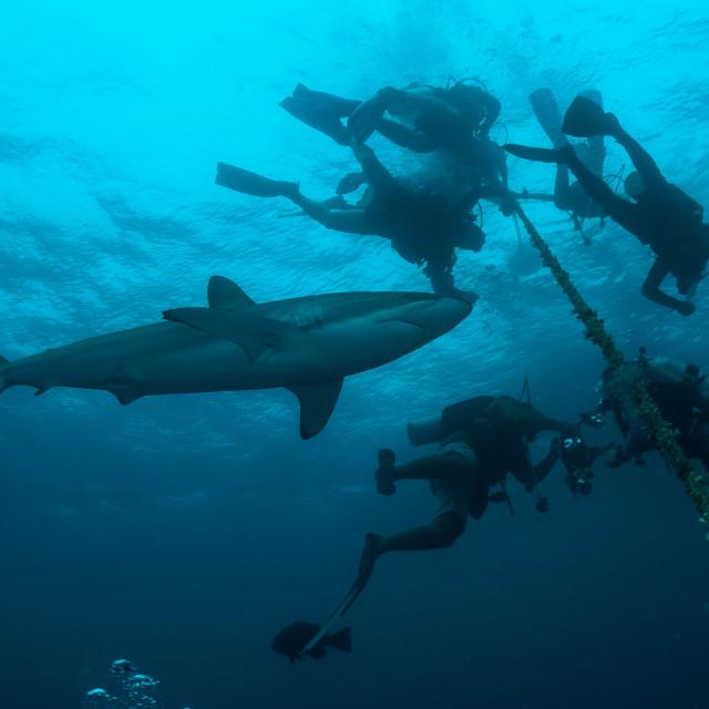"""""""Tubarão e mergulhadores em volta"""" stock image"""