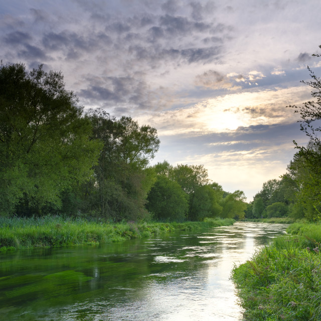 """""""Summer evening golden light on the River Itchen - full of Water"""" stock image"""