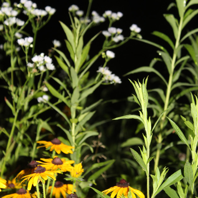 """wildflower garden at night"" stock image"