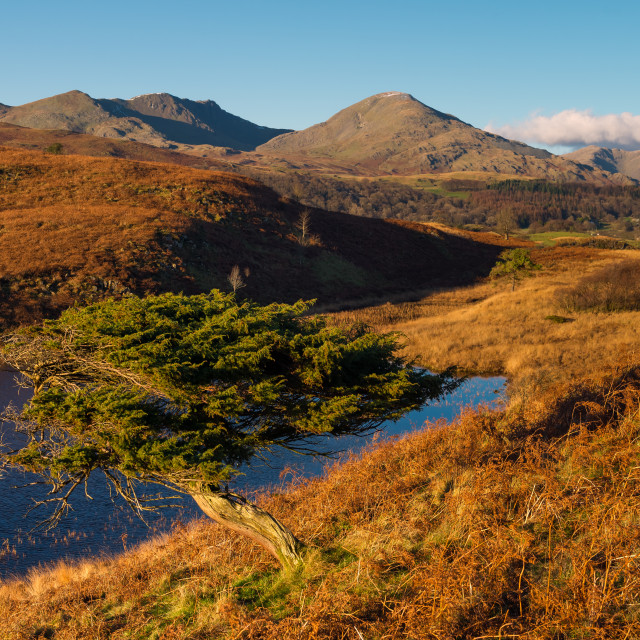 """Coniston old man fron Torver Low Common"" stock image"