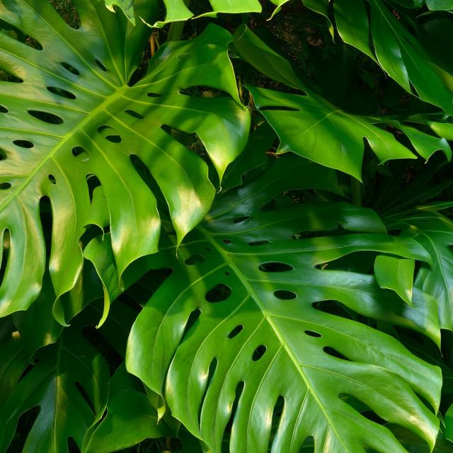 """""""Foliage_13"""" stock image"""
