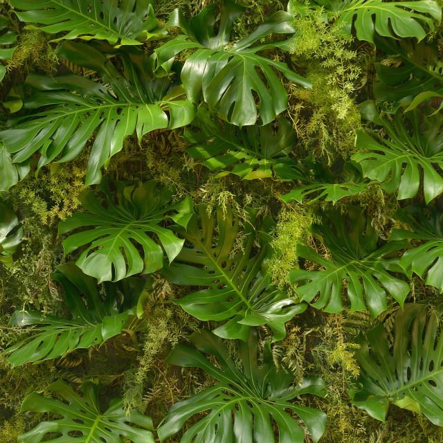 """""""Foliage_12"""" stock image"""