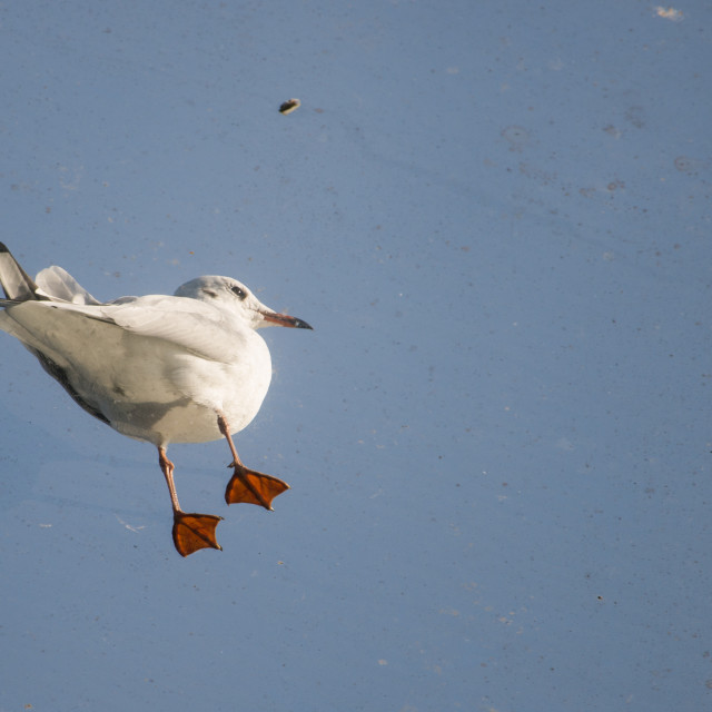 """Small gull standing on a glass roof"" stock image"