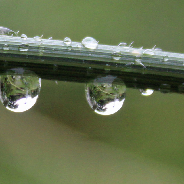 """raindrop reflections on a green stem"" stock image"