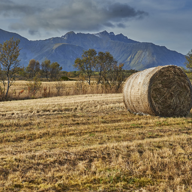 """Hay Rolls on Gimsøy - No. 2"" stock image"