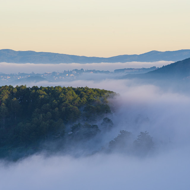 """Early morning, forest trees with clouds and mist fog"" stock image"