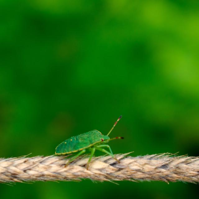 """Green stink bug on blurred bokeh background"" stock image"