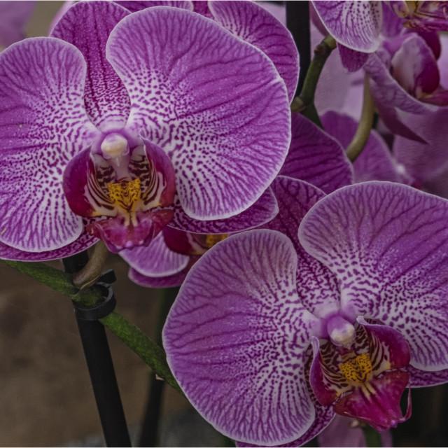 """Orquideas"" stock image"