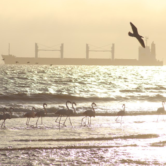 """""""Wildlife and ships"""" stock image"""