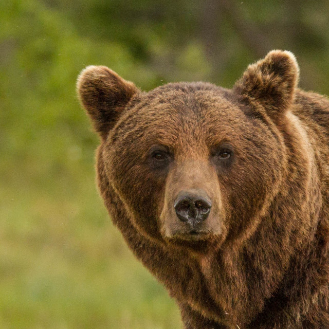 """Bear watch"" stock image"
