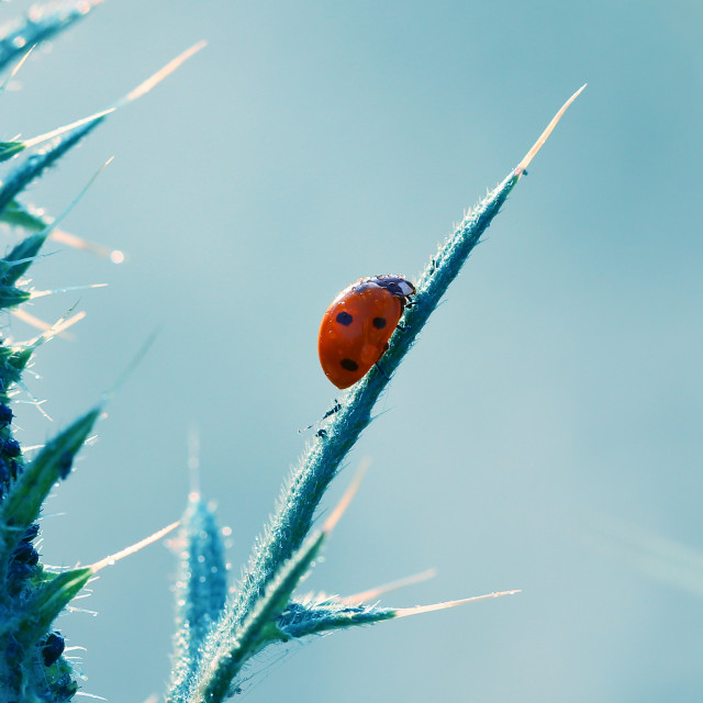 """The little red ladybug living in my garden is beautiful."" stock image"